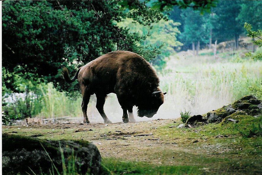 Teambuilding, safari och äventyr bland vilda djur