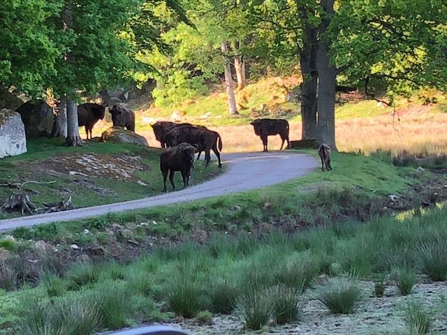 Cykelsafari bland vilda djur på Eriksberg Vilt o Natur